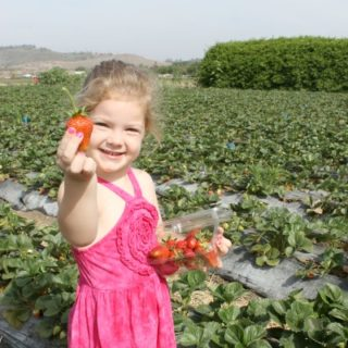 strawberry picking, fieldtrip, mommyhood